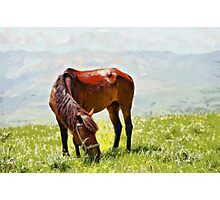 Horse at grass painting Photographic Print