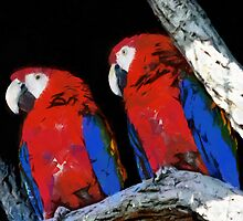 Two parrots closeup painting by Magomed Magomedagaev
