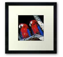 Two parrots closeup painting Framed Print