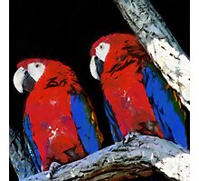 Two parrots closeup painting Photographic Print