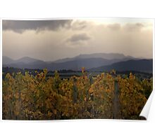 From Autumn Vineyard to the Hills Poster