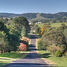 Country Road, Dorrigo, NSW by Adrian Paul