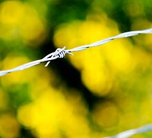 Barbed Wire by Andrew Robinson
