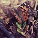 butterfly by passerby2