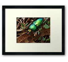 Jewel In The Undergrowth Framed Print