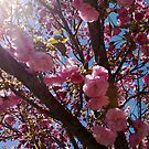Tree Blossoms in Pink by Linda  Makiej