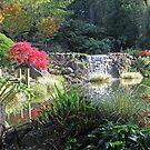 """""""Windyridge"""" Pond by Geoff Smith"""
