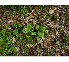 Ramps Among the Leaves Photographic Print