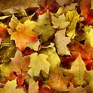 The Color of Autumn by Sheri Nye