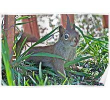 The Great Horned Squirrel Poster
