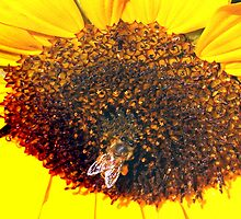 I bee-lieve this is one gigantic flower! by ♥⊱ B. Randi Bailey