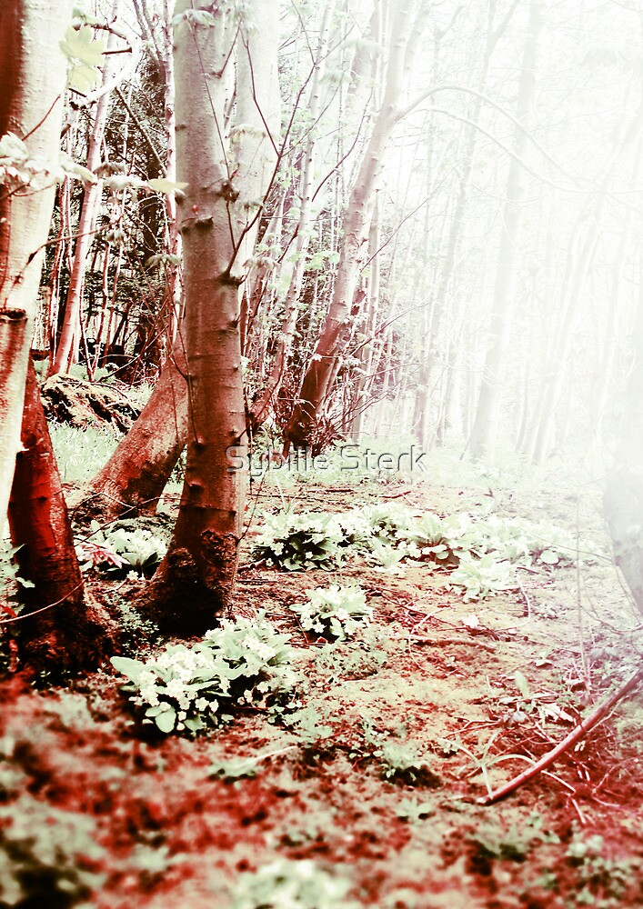 Blood Wood by Sybille Sterk