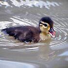 Baby Duck by venny