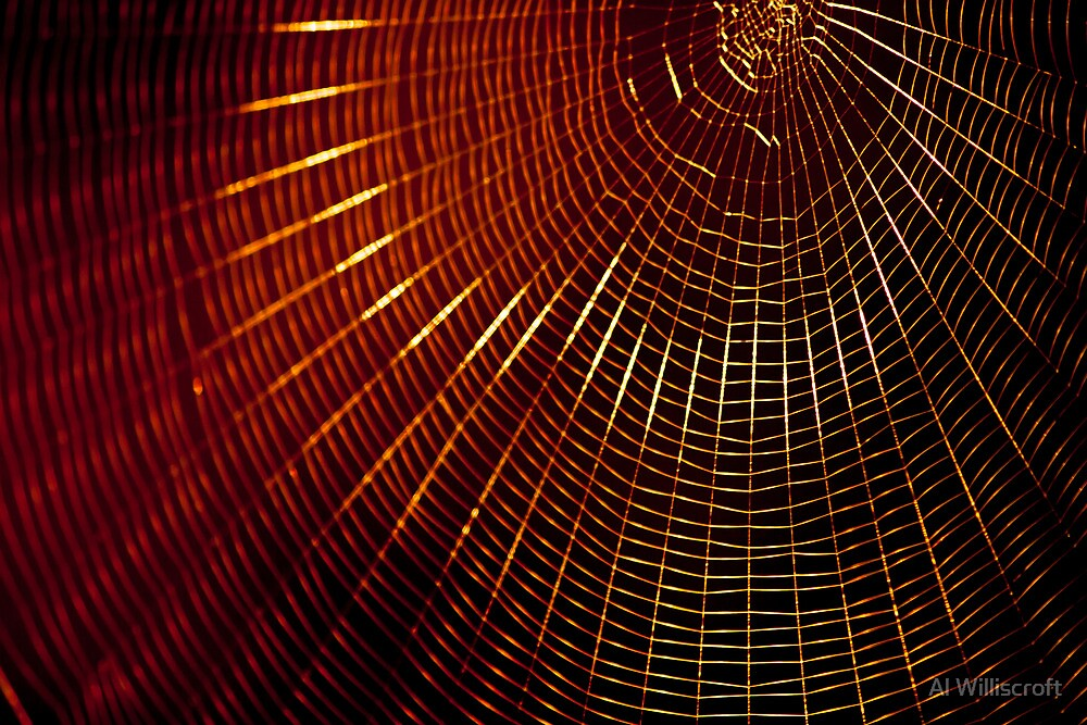 Web and sunlight by Al Williscroft