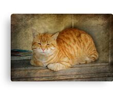 Ready For a Nap Canvas Print