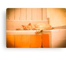 Afternoon Nap  II Canvas Print