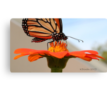 Long Beach, NY    Butterfly Topped Sunflower 023 Canvas Print
