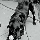 A Dog and Her Ball by WhiteLightPhoto