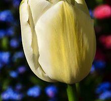 Tulip Time by Susie Peek