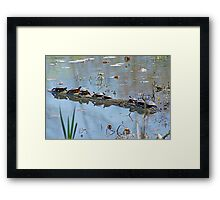 Reflecting On The Nice Spring Weather Framed Print