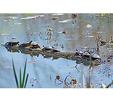 Reflecting On The Nice Spring Weather Photographic Print
