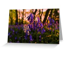 Sunset Bluebells Greeting Card