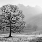 Misty MorningTree by Mick Gosling