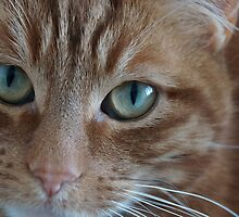 Ginger Cat by SophieGorner7