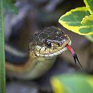 Common Garter Snake  by Mikell Herrick
