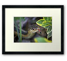 Common Garter Snake  Framed Print