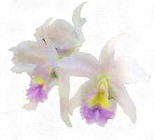 Cattleya Orchids by Rosalie Scanlon