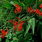 Crocosmia in Red by MotherNature