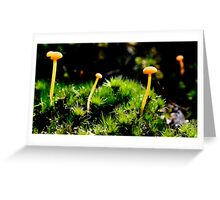 Native fungi in moss Greeting Card