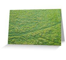 Grassy waves Greeting Card