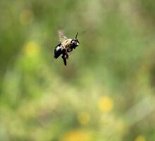 Bee-Ka-Boo by Okeesworld
