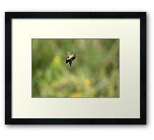 Bee-Ka-Boo Framed Print