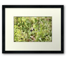 The Bee o_O Framed Print
