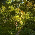 Light in the Garden by Barbara  Brown