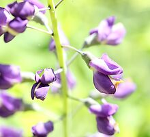 Purple Ladder o_O by Okeesworld