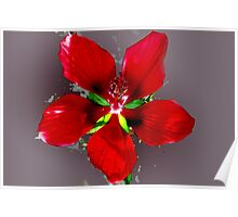 Swamp hibiscus Poster