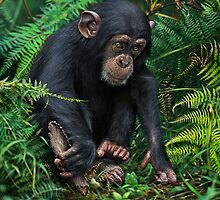 YOUNG CHIMPANZEE WITH TOOL by DilettantO