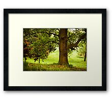 The vibrant colors of spring Framed Print