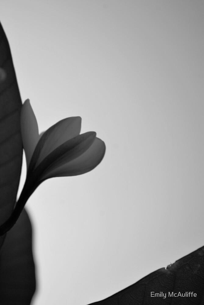 Black and white lone frangipani by Emily McAuliffe
