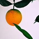The Orange Tree by Emily McAuliffe