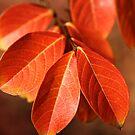 Autumn Richness by Joy Watson