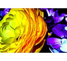 Spring Colours. Photographic Print
