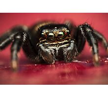 Jumping spider drinks water Photographic Print