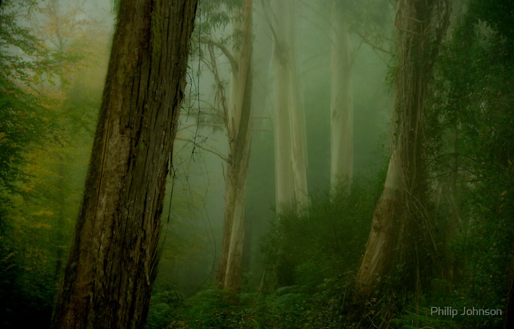 Bush Magic - Mount Wilson - NSW  - THE HDR Experience by Philip Johnson