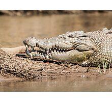 Saltwater crocodile (Crocodylus porosus) Photographic Print