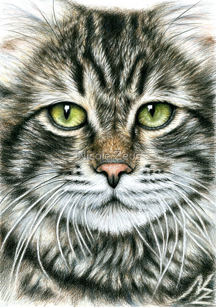 Cats Face by Nicole Zeug